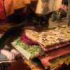 piper resting her chin on a stack of fabric