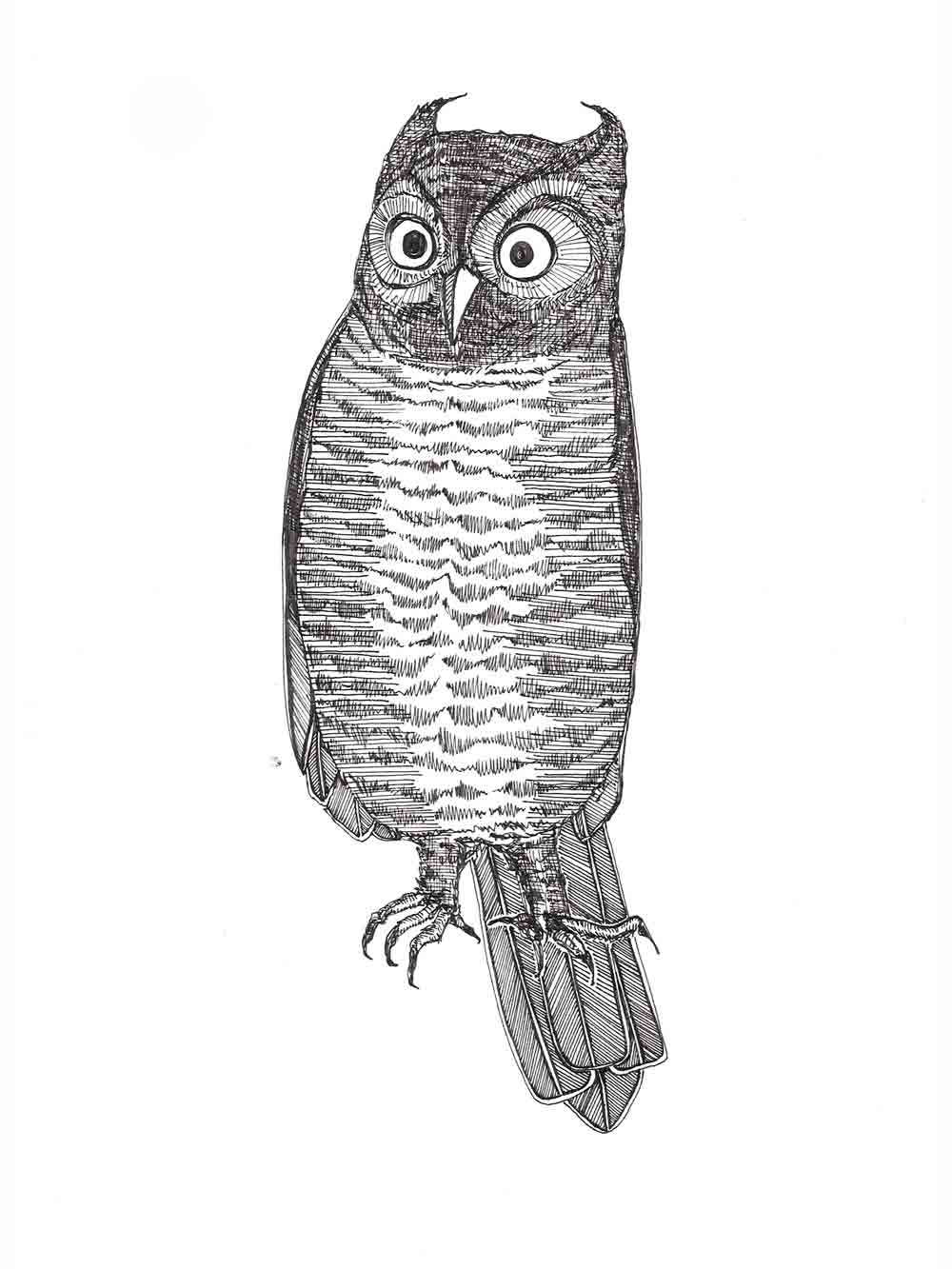 indignant owl drawing